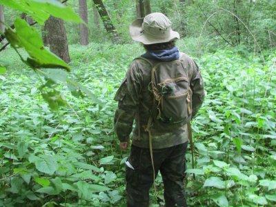 Konsultacje lasów referencyjnych